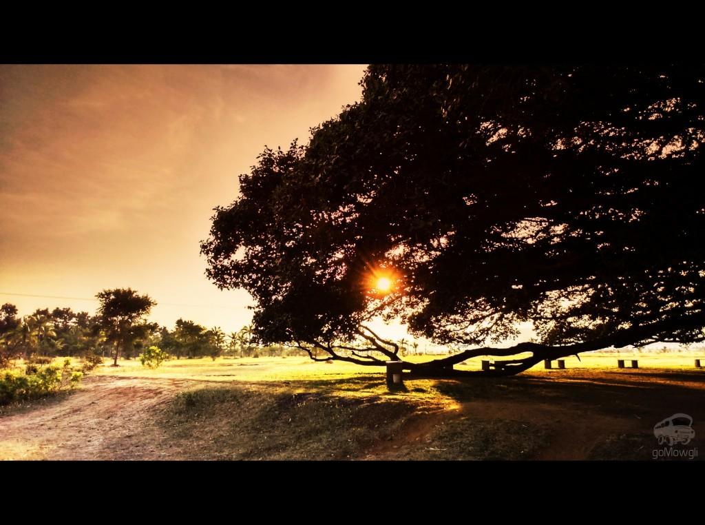 Sunset with goMowgli