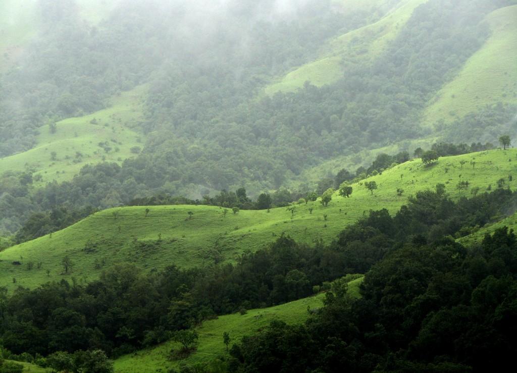 Stunning Shola Grasslands of Karnataka