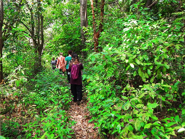 Things to do in Coorg includes a wildlife safari
