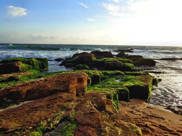 Visit the numerous beaches on goMowgli's Kerala Hop on hop off tour