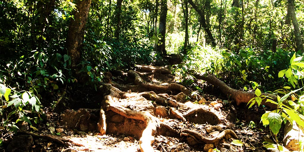 Evergreen forests beckon you if you seek wildlife tours in India
